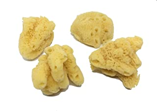 4-Pack of Jumbo Hermit Crab Sea Sponges (All Natural Hermit Crab Sponge) Awesome Aquatics
