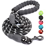 Top 10 Best Leashes of 2020