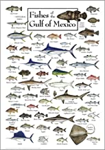 fish in the gulf of mexico chart