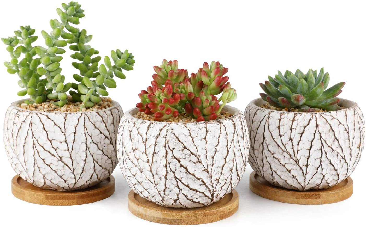 T4U 4 Inch Cement Succulent Plant Pot with Tray, Small Concrete Cactus Flower Planter Set of 3, Leaf Pattern Indoor Succulent Bowl for Home Office