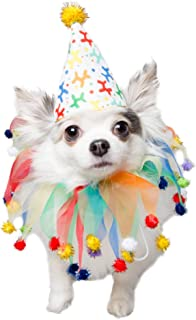 Pet Krewe Unleash the Parade Birthday Dog Collar & Hat | Pet Costume for Dogs 1st Birthday, National Cat Day & Celebration...