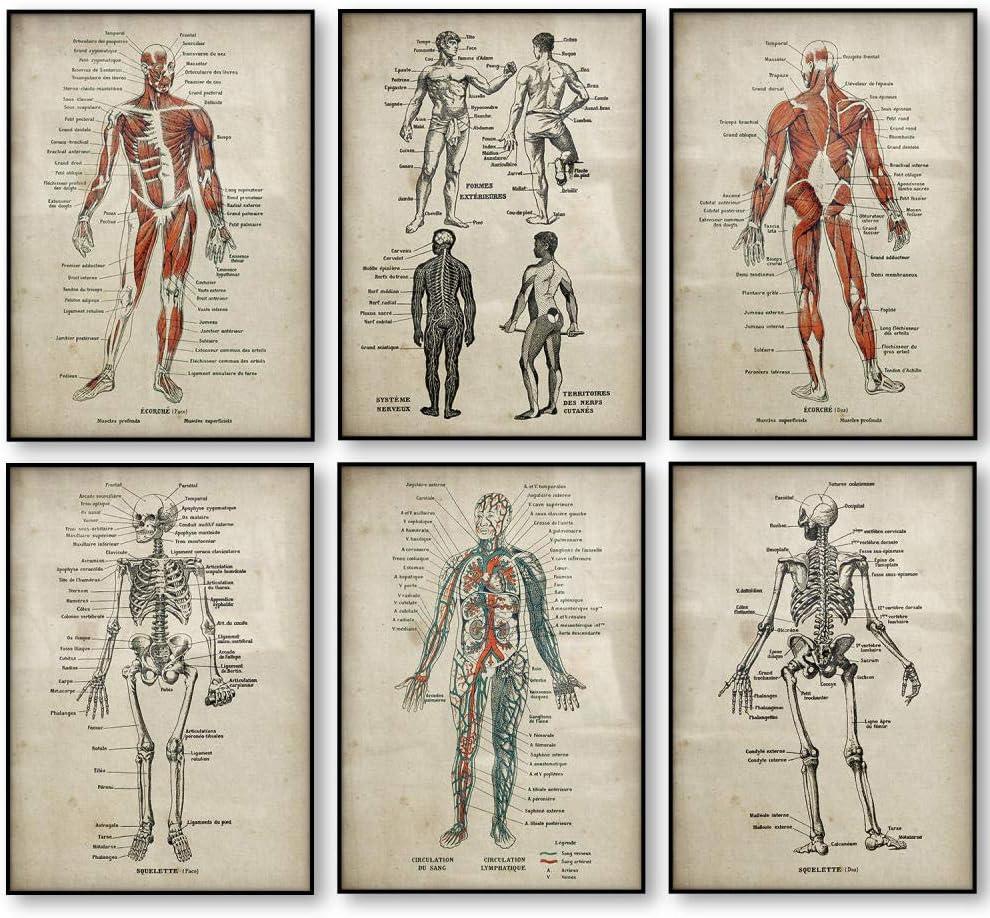 Anatomy Prints Canvas Poster Set Body Mus Skeleton 春の新作続々 Medical 受注生産品 Human