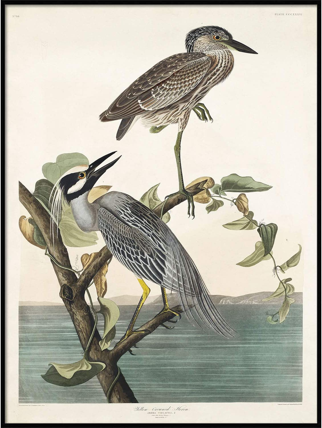 Heron Print Antique Bird Sales for sale Painting Vintage Drawing Superlatite Wall Poster