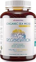 Irish Sea Moss Organic Bladderwrack Burdock Root 120 Capsules - Wildcrafted Seamoss Raw Organic Herb Cell Health Irish Mos...
