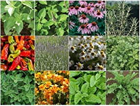 David's Garden Seeds Collection Set Herb Medicinal 19 Varieties 8876 (Multi) 6000 Seeds (Non-GMO, Open Pollinated, Organic)