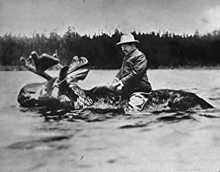Home Comforts Theodore Teddy Roosevelt Riding A Moose Poster Art American Presidents Posters Artwork Vivid Imagery Laminated Poster Print 24 x 36