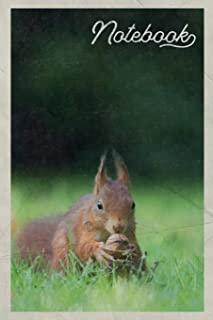 Notebook: Ardilla scoiattolo rosso Pretty Composition Book Journal Diary for Men, Women, Teen & Kids Vintage Retro Design for American Red Squirrel Fans