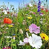 Plantes sauvages saisonnières et vivaces, graines mélangées