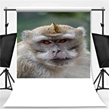 Beautiful Monkey Reunion in South Africa Theme Backdrop Photo Backdrop Photography Backdrop,074758,6.5x6.5ft