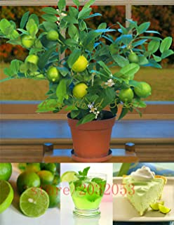 20pcs/bag kaffir lime seeds, lime seeds, (Citrus aurantifolia) ,organic fruit seeds, BONSAI fruit lemon tree for home garden