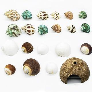 Alpurple 21 PCS Hermit Crab Growth Shells- Natural Turbo Sea Shells Turbo Shells Hermit Crab with Coconut Hide Reptile Hid...