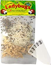 1500 Pre-Fed Live Ladybugs | Hippodamia Convergens | Guaranteed Live Delivery | Targets Aphids, Moth Eggs, Mites, Scales, Thrips, Leafhoppers, Mealybugs and Other Slow-Moving Insects + THCity Stakes