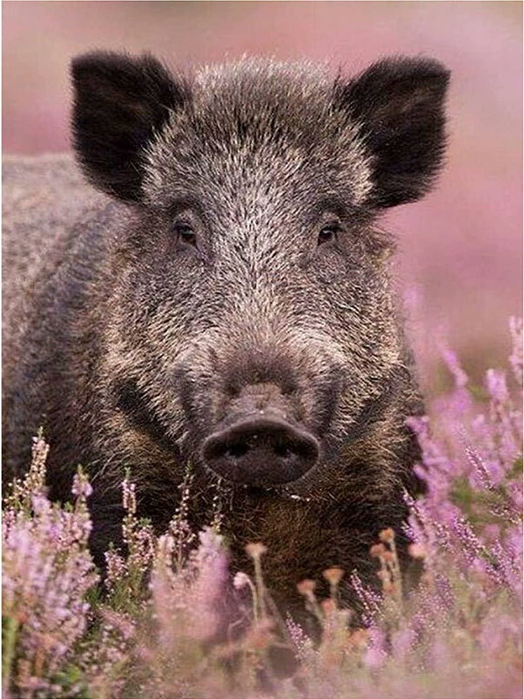 Mstoio Manufacturer regenerated product 3000 Piece Max 67% OFF Adult Puzzle Grass Pig Puzzles Layer Jigsaw fo