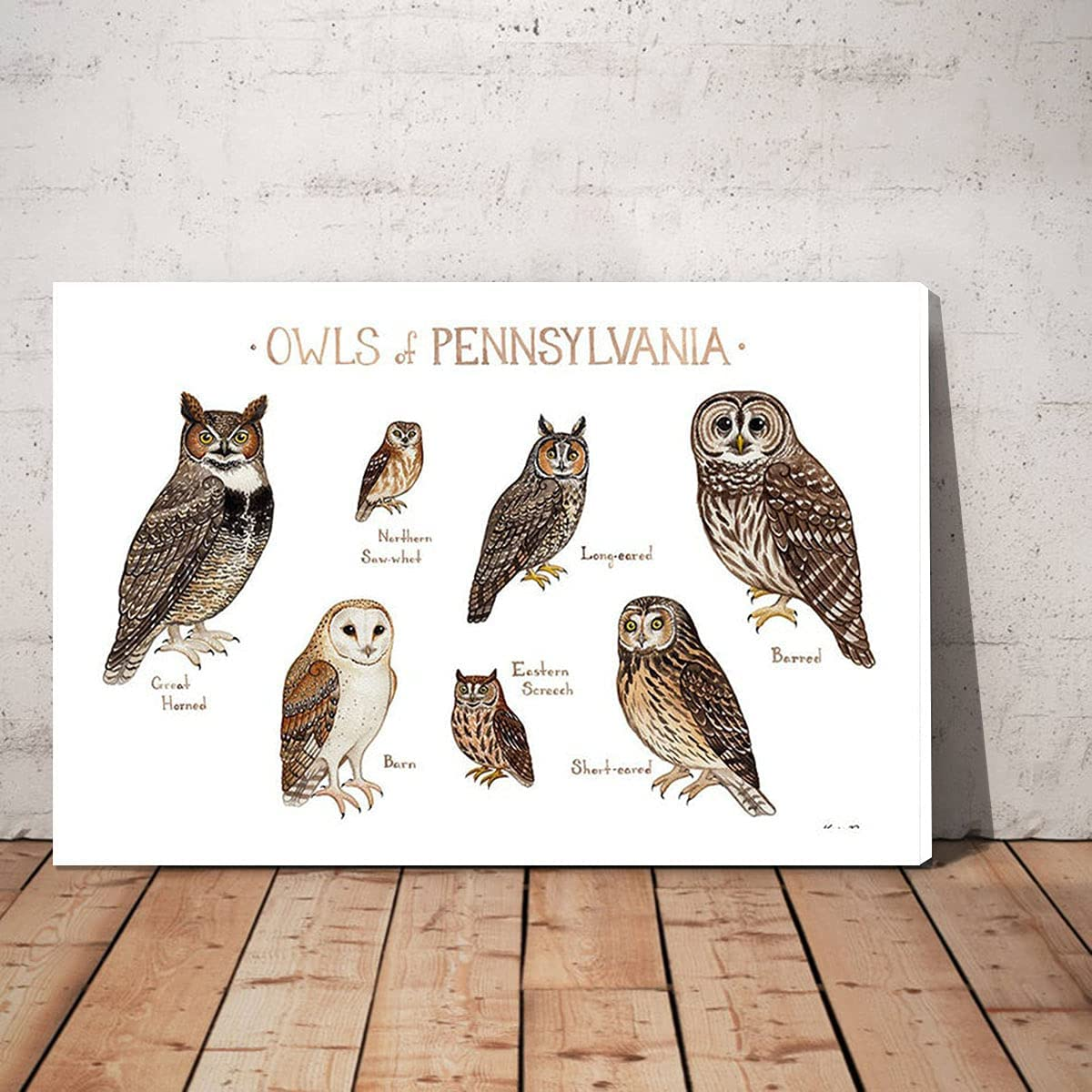 LuiV Save money HAM Types of Rare OwlsKnowledge Canvas OwlsKn Art Wall