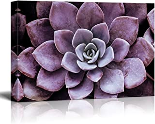 wall26 Canvas Wall Art - Closeup of a Purple Succulent Plant - Giclee Print Gallery Wrap Modern Home Decor Ready to Hang - 32