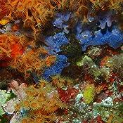 Olympus Ufl 3 Unterwasser Blitz Kamera