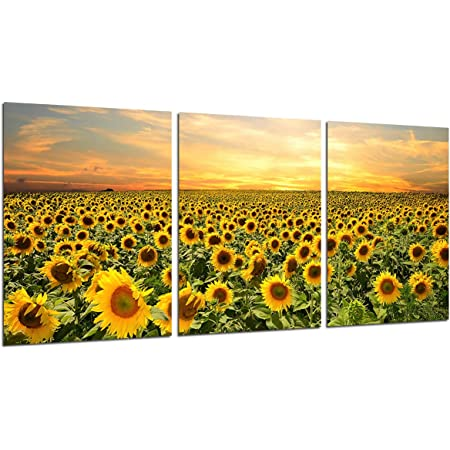 Amazon Com Sunflower Wall Art Canvas Painting Home Decor Nature Yellow Flowers Pictures Sunset Posters And Prints Kitchen Decoration Paintings For Living Room Modern Artwork 3 Panels 12x16 Unframed