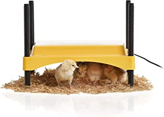 Best poultry brooder heater Reviews
