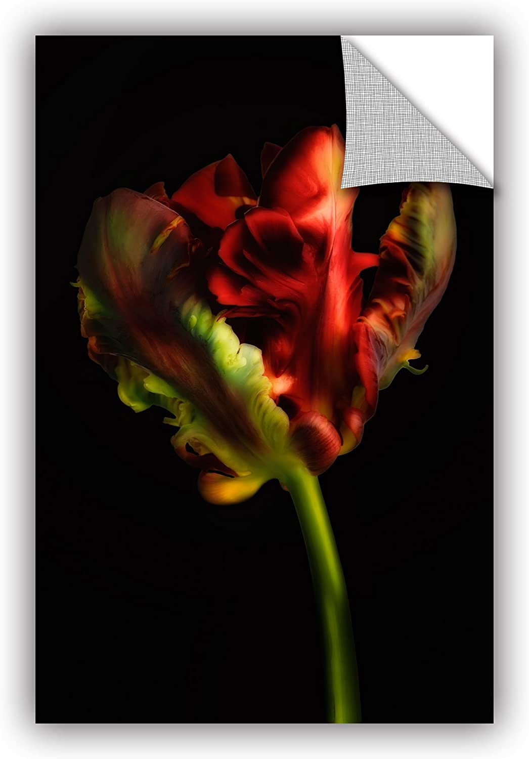 Art Wall Cora Niele's Tulipa Parred II Appeelz Removable Graphic Wall Art, 16 by 24Inch