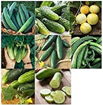 David's Garden Seeds Collection Set Cucumber NEP567 (Green) 8 Varieties 400 Seeds (Non-GMO, Open Pollinated, Heirloom, Organic)