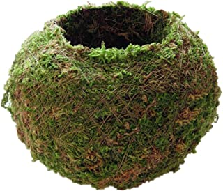 MagiDeal 9,12,15,18cm Moss Ball, Planter Pot, Suit Orchid Or Small Plant Garden Decoration - Green, 18cm