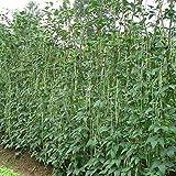 Rosepoem Lange Bohnensamen-Garten-Gemüse-organische grüne frische chinesische Samen für das Pflanzen der Außentür-Kochgeschirr-Geschmack-süßen köstlichen - 1 Beutel
