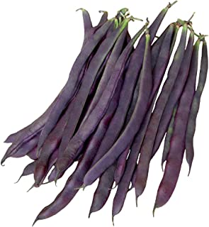 Burpee Trionfo Violetto Pole Bean Seeds 30 g