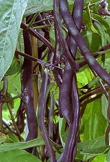 10 seeds - Seeds Climbing Beans Purple King Organic Heirloom Vegetable Seed