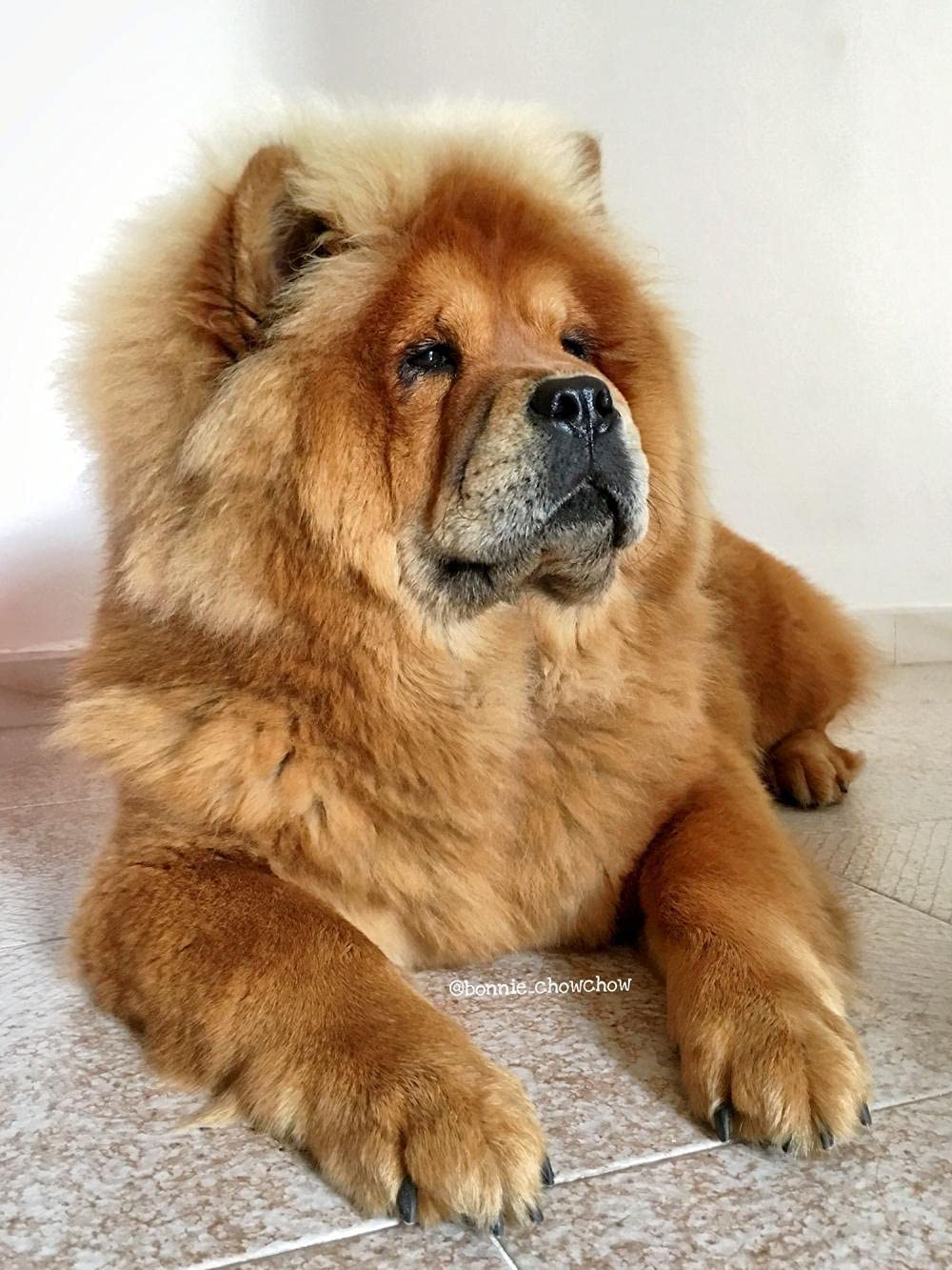 Cute Chow Pet Dog 67% OFF of fixed price Animal 5D Kit Painting Adults Diamond Max 67% OFF for