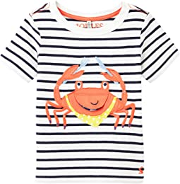 Navy Stripe Crab