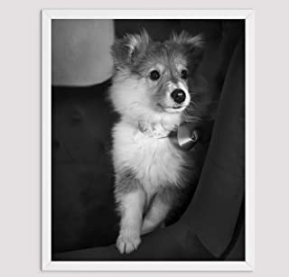 Shetland Sheepdog regali per gli amanti dei cani, Poster stampe su tela varie dimensioni, Sheltie Art Print Wall Decor, Sh...