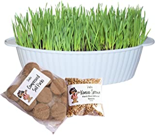 Dudes Cat Grass Seeds Kit with Planter - Cat Hairball Remedy - Kansas Grown Seeds, Soil Pucks and Large Planter