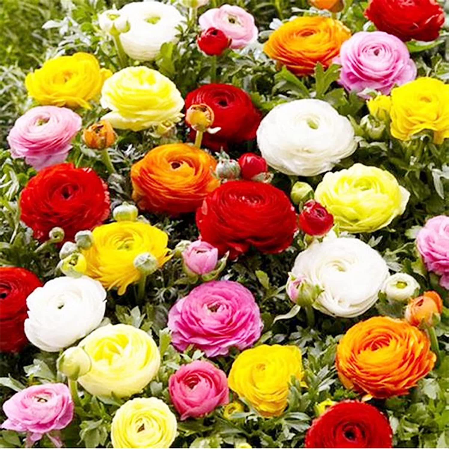 Surprise Gift Bloom All Year Garden for Ranking TOP19 Suitable Max 58% OFF Planting Round