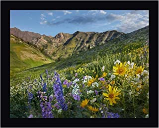 Larkspur and Sunflowers, Albion Basin, Wasatch Range, Utah by Tim Fitzharris 27
