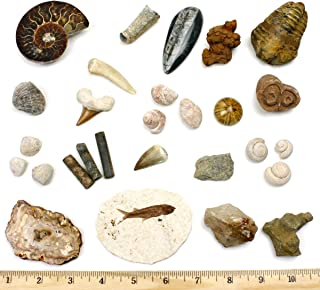 Dancing Bear Fossil Collection Set, 20 Real Specimens: Trilobite, Ammonite, Fish Fossil, Shark Tooth, Petrified Wood, Dinosaur Bone, Fossil Book, Time Scale, ID Cards, Magnifying Glass, Science Kit