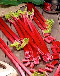 Rhubarb Seeds Pie Plant Around 50 Seeds
