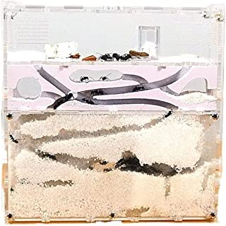KYBCT アリの巣 観察キット 飼育ケース 自由研究 蟻 飼育 アリ飼育キット アリ繁殖 昆虫採集 水槽 アクリルケース 砂なし