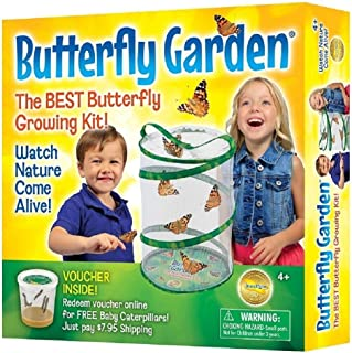 Insect Lore Butterfly Growing Kit – With Voucher to Redeem Caterpillars Later