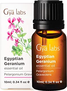 Gya Labs Egyptian Geranium Essential Oil - Mood Calmer for Flawless & Ageless Skin (10ml) - 100% Pure Natural Therapeutic ...