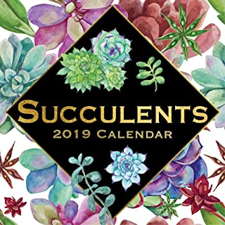 Nyc Board Of Education Calendar 2020-16 Amazon.com: succulent calendar 2019
