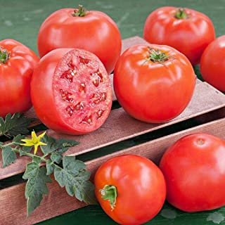 Goliath Tomato Seeds (20 Seed Pack)