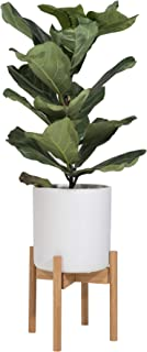Best bamboo leaf plant Reviews