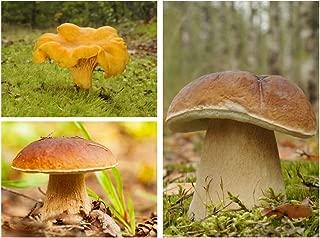 Set de setas de roble y haya - 3 especies - micelio - semillas
