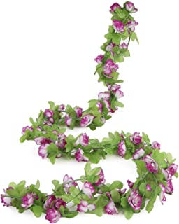 purple ivy plant