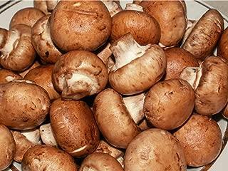 25 G Seeds Spores Royal Agaricus Bisporus Portobello Mushrooms Kit / Fungus