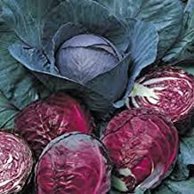 Cabbage, Red Acre seeds, Organic, NON-GMO, 50+ seeds per package,This hardy, healthy and delicious crop is easy to grow an...