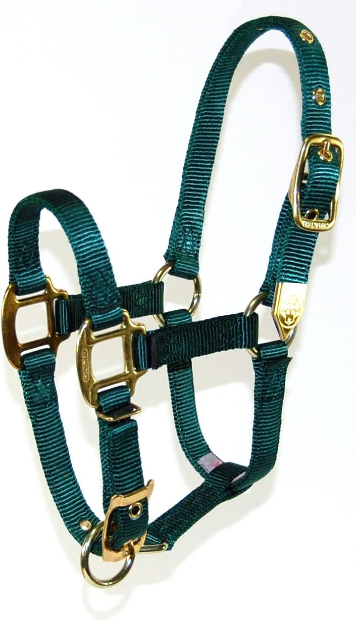 Hamilton 8DA AVBK 3//4-Inch Nylon Adjustable Arabian Horse Halter for 800 to 1100-Pound Horse