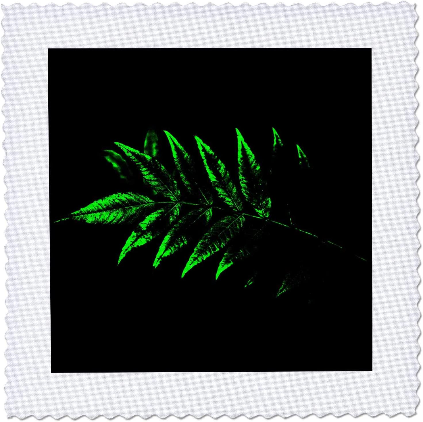 3dRose Abstract photograph Cheap mail order sales of bright Popular standard green leaves sumac on black