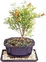 Best dwarf plants images Reviews