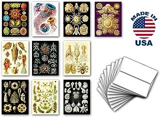 天然货币货币卡片 10 件套。 内部空白。 Ernst Haeckel 出品的包含自然画和海洋画的不同包装卡片。 美国制造。